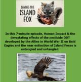 """NPR Worksheet & Hyperlink """"To Save a Fox"""" (Eagles & DDT, H"""