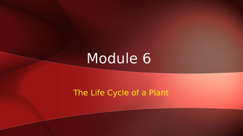 Engage NY:  Module 6 - Lesson 4:  The Life Cycle of a Plant