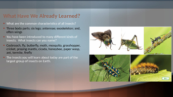 NY Engage:  Module 8 - Lesson 7:  Armored Tanks of the Insect World