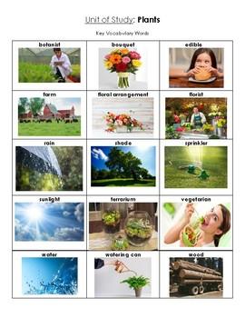 NYCDOE Pre-K Unit: Plants Key Vocabulary Words