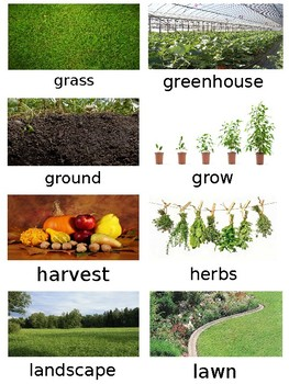 NYCDOE PreK Plants Unit Vocabulary Cards