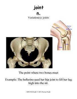 NYS ELA Module 2 The Human Body Lesson 1-5 Vocab