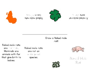 Naked Mole Rat -- 10 Resources -- Coloring Pages, Reading & Activities