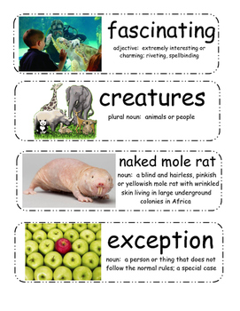 Naked Mole Rat Gets Dressed Vocabulary Cards