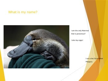 Mammals- Name That Animal Game!