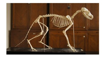 Name That Animal!  Skeletal System Intro Powerpoint