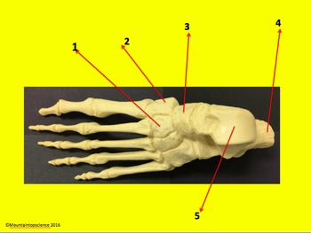 Name That Bone, Structure, or Joint