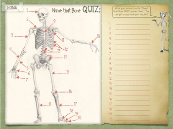 Skeletal System - Name That Bone Tutorial
