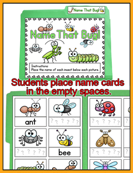 Insects File Folder Game - Name the Bug