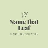 Name That Leaf! Plant Identification Worksheet