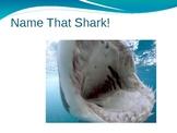 Name That Shark!