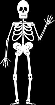 Name that Skeleton