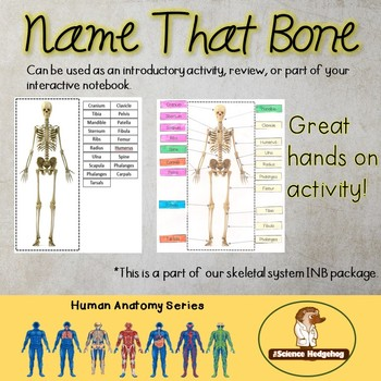 Name that bone