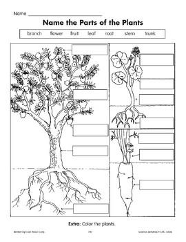 Name the Parts of the Plants/Nombra las partes de una planta