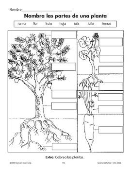 Las Partes De La Planta Worksheets Teaching Resources Tpt