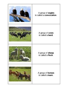 Names of Animal Groups