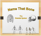 Skeletal System: Names of Bones