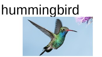 Names of different BIRDS powerpoint