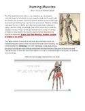 Naming Muscles (Human Anatomy)