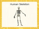 Naming bones on a Skeleton - Special Needs Resource with Symbols