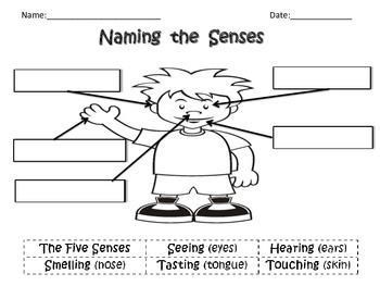 Naming the Senses