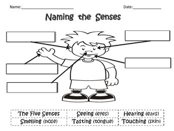 Naming the Senses
