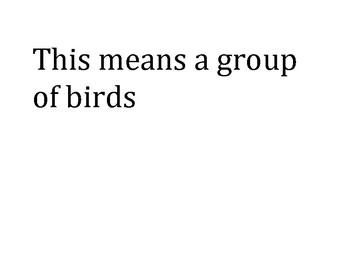 Nancy Larson Bird Unit Review