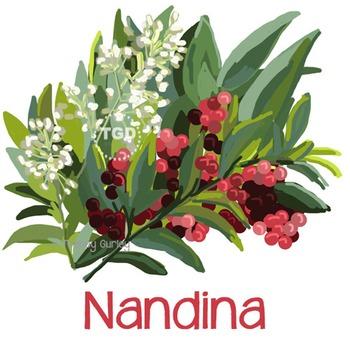 Nandina Painting - nandina clip art Printable Tracey Gurley Designs