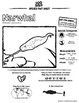 Narwhal - 15 Zoo Wild Resources - Leveled Reading, Slides & Activities