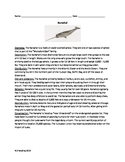 Narwhal - Whale - review article questions facts information vocabulary