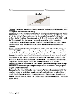 Narwhal - Whale - review article questions facts informati