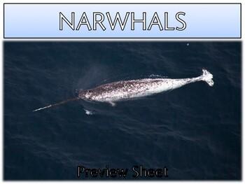 Narwhals - Mini Unit