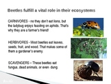 National Geographic Explorer PPT for March 2013 issue - Carnivores, Herbivores