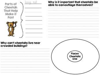 National Geographic Kids Cheetahs Reader GRL M