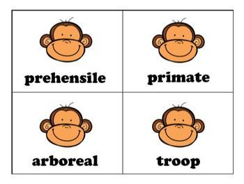 National Geographic Kids:  Monkeys - Book Study
