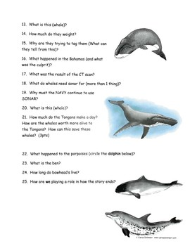 National Geographic Whale in Crisis Video Worksheet