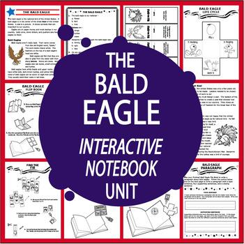 Bald Eagle Us Symbol Interactive National Symbols American