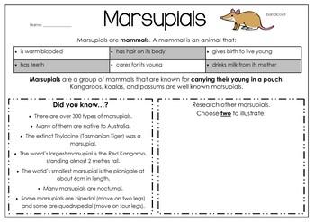 Native Australian Animals - Marsupials and Mammals Theme Pack