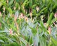 Digital Photos of Native Plants of Oahu Hawaii
