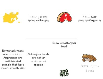 Natterjack Toad -- 10 Resources -- Coloring Pages, Reading & Activities