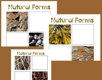 Natural Forms Drawing Worksheets