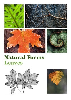 Natural Forms Leaves