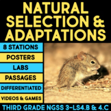 Natural Selection & Adaptation Science Stations BUNDLE