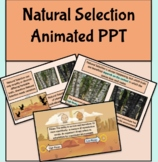 Natural Selection Animated PowerPoint (Biology & AP biology 7.1-7.2)