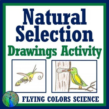 Natural Selection Assignment Activity (Evolution - Middle School) NGSS MS-LS4-6