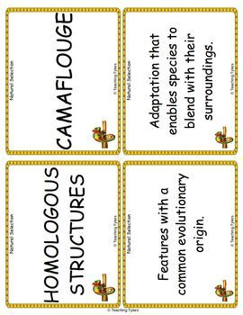 Natural Selection Vocabulary Cards