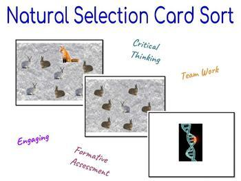 Natural Selection Card Sorting Activity
