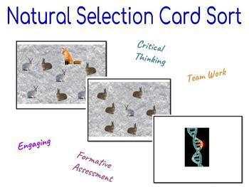 Natural Selection Card Sorting Activity
