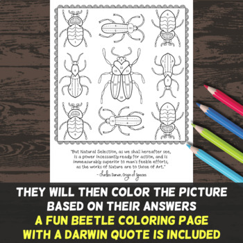 natural selection color by number fun worksheet by morpho science. Black Bedroom Furniture Sets. Home Design Ideas