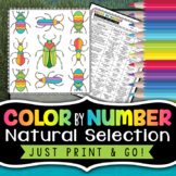 Natural Selection Color By Number - Use for a Worksheet, Test Review, or a Quiz